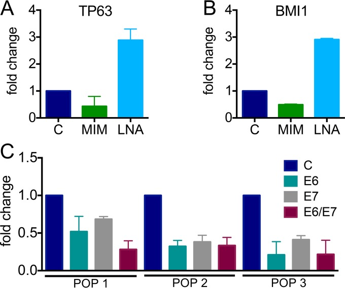 Modulation of miR-203a-3p targets and analysis of miR-203a-3p expression. Effects of a miR-203a-3p mimic (MIM, green) or an LNA inhibitor (light blue) on TP63 (A) and BMI1 (B) levels in HPV16 E6/E7-expressing HFKs. Expression of 18S rRNA was used as an internal control, and values were normalized to a negative control (C) mimic or LNA. TP63 and BMI1 expression was assessed by RT-PCR. (C) Expression of miR-203a-3p in three independently derived HFK populations expressing HPV16 E6, E7, or E6/E7 or a control vector via TaqMan miR assay. Expression of the noncoding snRNA U6 spliceosomal RNA was used as an internal control. Results represent averages of at least three independent experiments.