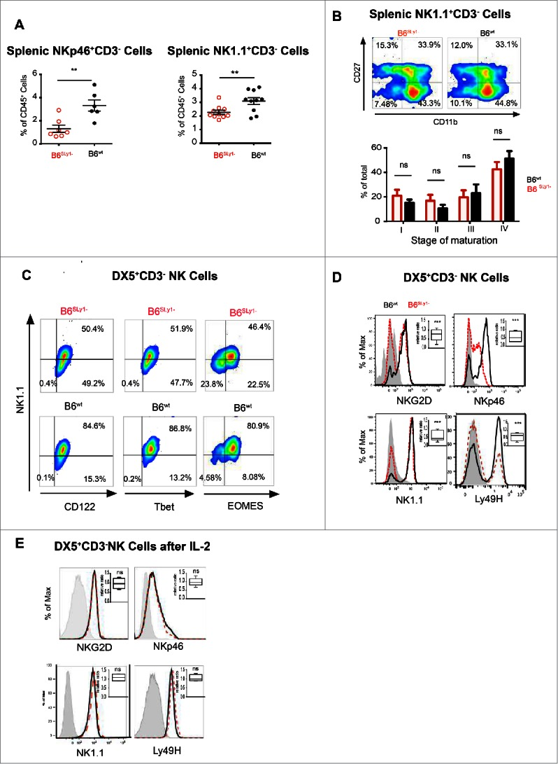 B6 SLy1− NK cells demonstrate multiple phenotypic defects. (A) Quantification of splenic NK cells defined as either NK1.1 + CD3 − or NKp46 + CD3 − . Comparison performed by unpaired t-test. (B) Comparison of four-stage maturation program of splenic NK1.1 + CD3 − NK cells in B6 SLy1− and B6 wt mice as defined by surface expression of CD27 and CD11b. Representative flow cytometry plots at the top and summary data of five separate experiments at the bottom. (C) Expression of NK1.1, CD122, Tbet and EOMES in B6 SLy1− and B6 wt splenic CD3 − DX5 + NK cells. (D) Representative histograms and relative ratios (right upper corner) of NKG2D, NKp46, NK1.1 and Ly49H in DX5 + CD3 − splenic NK cells in in B6 SLy− and B6 wt mice. Representative of five separate experiments performed on different animals from different litters. Statistical analysis performed by unpaired t-test to the null hypothesis considering the relative ratio to be 1. (E) Representative histograms and relative ratios (right upper corner) of NKG2D, NKp46, NK1.1 and Ly49H in DX5 + CD3 − splenic NK cells in in B6 SLy1− and B6 wt mice after activation in vitro with 1,000 IU/mL of IL-2. Statistical analysis of (D) and (E) performed by unpaired t-test to the null hypothesis which assumes the relative ratio to be 1.