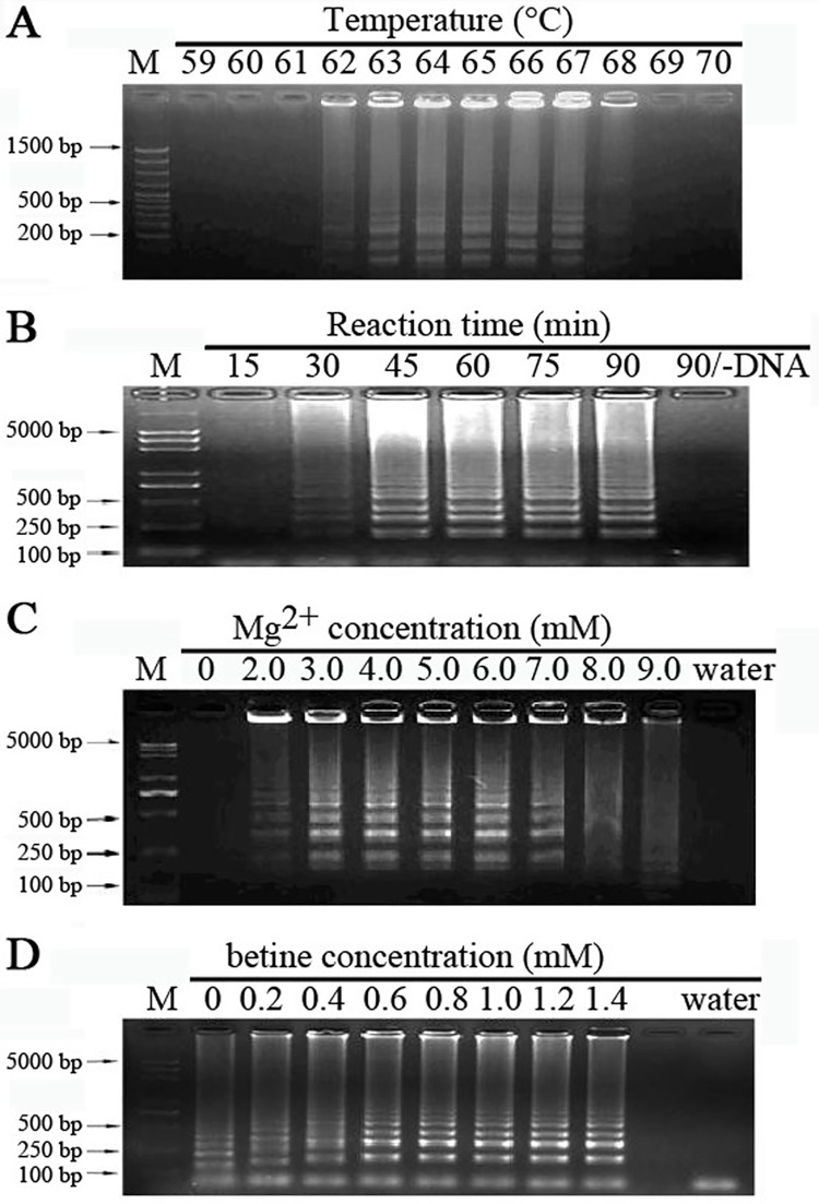 Optimization ofLAMP reactions. LAMP reaction were carried out using genomic DNA from tachyzoites under various conditions, as different reaction temperatures (A), reaction times (B), Mg 2+ concentrations (C) and betine concentrations (D). Lane (M), DNA ladder.