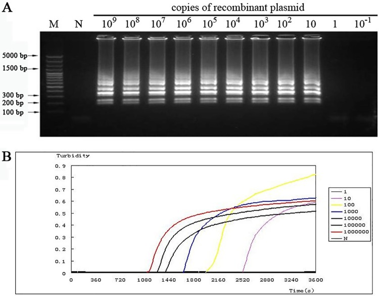The sensitivity of LAMP was checked. (A) LAMP reaction with different copies of the recombinant plasmid as the template.Lane (M), DNA ladder. (B) LAMP reaction with different copies of the recombinant plasmid was monitoredon the LoopampRealtimeTuribidimeter.