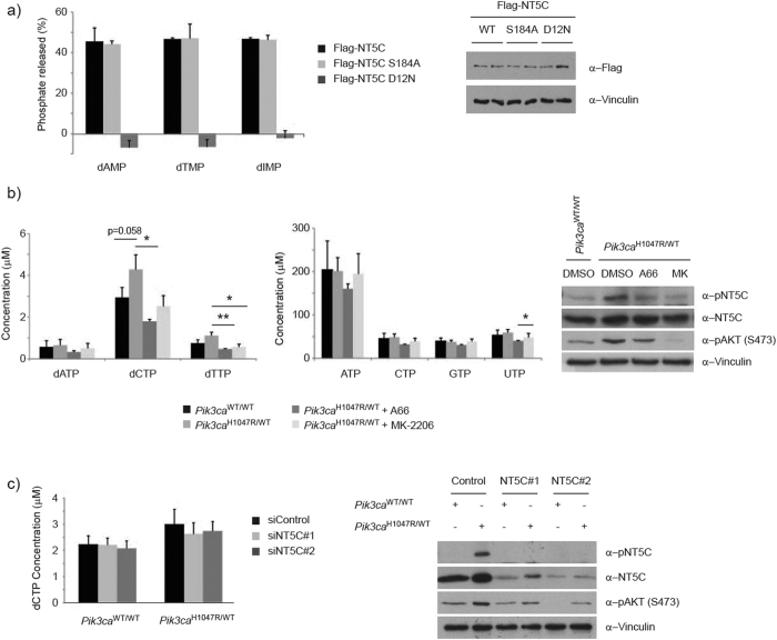 Impact of S184 phosphorylation of NT5C catalytic activity. ( a ) S184 phosphorylation does not regulate NT5C nucleotidase activity in vitro . (left) Immunoprecipitates of Flag-NT5C ectopically expressed in HEK293 cells were incubated with 5 mM of the indicated nucleotides. Phosphate release was measured using a malachite green colorimetric assay and expressed as a percent of total nucleotide. The experiment was performed in duplicate and repeated 3 times independently. Error bars are sem. (right) Representative immunoblot from experimental cells. ( b ) Cells expressing Pik3ca H1047R have elevated dNTP levels. (left, middle) Nucleotides were extracted from primary MEFs and analysed by UPLC-MS/MS. The experiment was performed in triplicate and repeated 4 times independently. Error bars are sem, *p