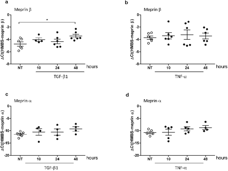 Meprin β is regulated by TGF-β1 in epithelial cells. mRNA expression level of meprin β and meprin α upon TGF-β1 (10 ng/ml) ( a , c respectively) and TNF-α (1 ng/ml) ( b,d respectively) stimulation on A549 cells for the indicated time points (*p