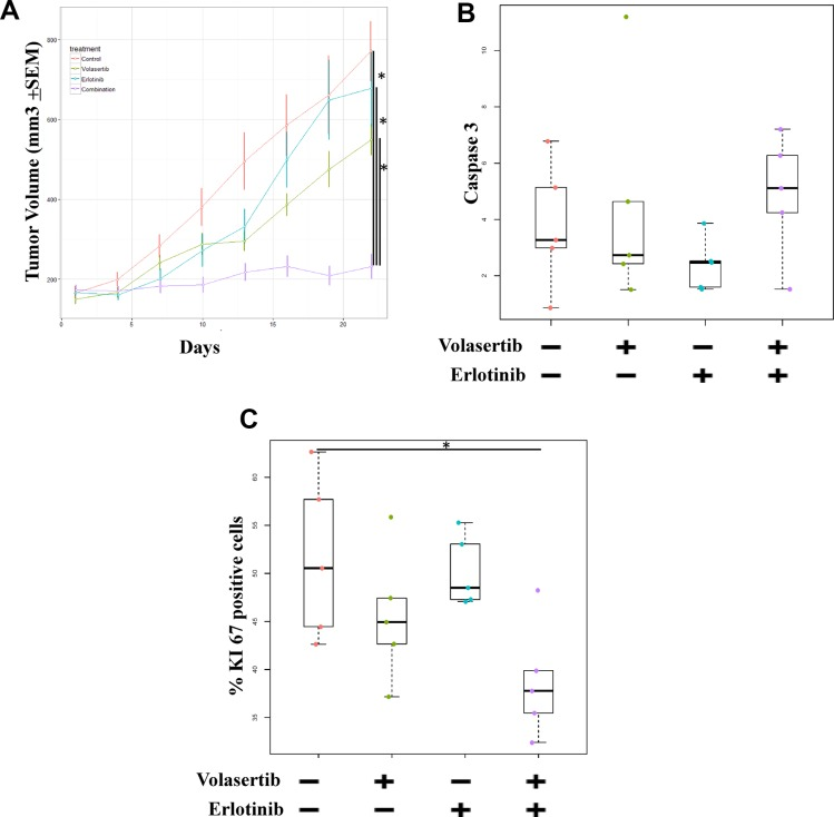 Inhibition of both PLK1 and EGFR is more effective than inhibition of either target alone in ER NSCLC xenograft models. Mice bearing PC9-ER9 xenograft tumors with volumes of 150 mm 3  were treated with volasertib and/or erlotinib or with vehicle controls ( A ) Tumor volume was measured twice weekly and significantly decreased after combination treatment. After 3 weeks of treatment, the mice were humanely killed. Resected tumors were subjected to immunohistochemical analysis for Ki67 ( C ) and caspase 3 ( B ) protein expression, which was scored and quantitated.