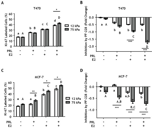 Stiff environments increase FAK-mediated hormone induced proliferation T47D and MCF-7 cells were plated on 12 or 75 kPa polyacrylamide gels coated with 200 μg/ml collagen-I in phenol-red free 5% charcoal stripped FBS for 24 h, serum starved for 24 h, and then treated with vehicle (DMSO 1:1000) or the FAK inhibitor, PF-573228 (1μM), for 1 h prior to ± PRL (4 nM), ± E2 (1nM) for 24 h. Cells were then stained with DAPI and Ki-67 antibody as described in Experimental Procedures. A, C. Effect of hormones on Ki67 staining, assessed by percentage of Ki-67 positive T47D (A) and MCF-7 (C) cells. B, D. Inhibition of proliferation by PF-573,228 compared to vehicle treated T47D cells (B) and MCF7 cells (D). Different letters represent significant differences within each stiffness (lower case, 12 kPa; upper case, 75 kPa). * represent significant differences between the same treatments at different stiffnesses: *p