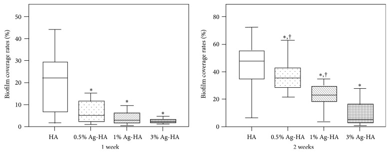 Box-and-whisker plots of biofilm coverage rates (BCRs) of implants after bacterial culture for 7 days and 14 days in vitro. In the 7-day experiment, 49 images of HA coating, including 14 images of 0.5% Ag-HA, 14 images of 1% Ag-HA, and 21 images of 3% Ag-HA, were used. In the 14-day experiment, 63 images of HA and 21 images of each group of Ag-HA were used. ∗ denotes significant differences between the BCRs of HA and each concentration of Ag-HA. The significance levels are as follows: 7 days: 0.5% Ag-HA, p = 0.011; 1% Ag-HA, p
