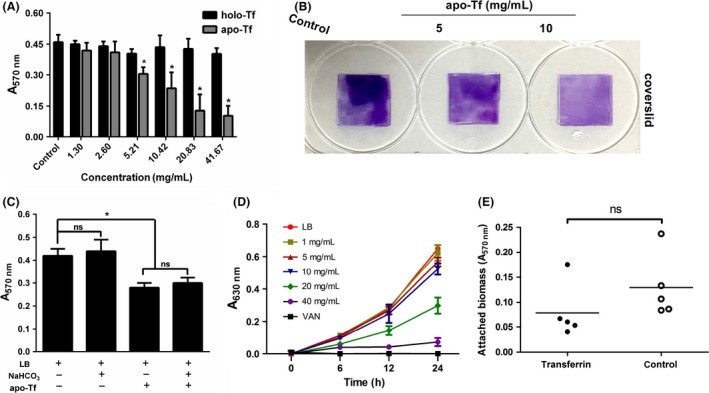 Effects of the HS component transferrin on Staphylococcus epidermidis ATCC 35984. (A) Biofilm formation by S. epidermidis in the presence of apo‐Tf and holo‐Tf at the concentration ranging from 0 to 41.67 mg/mL. * P