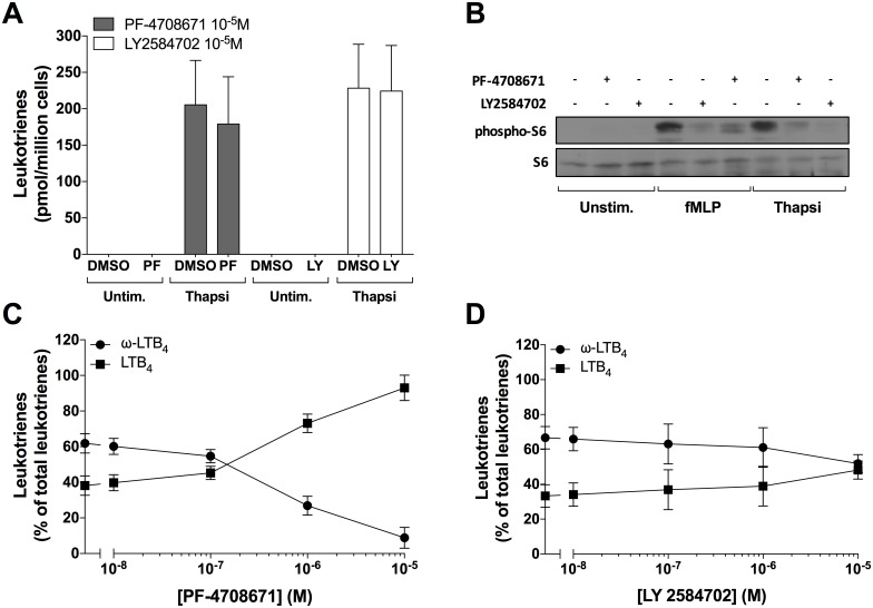 Impact of the p70S6K1 inhibitors on LTB 4 biosynthesis and ω-oxidation in neutrophil suspensions. A-D) Pre-warmed human neutrophil suspensions (37°C, 5 million cells/ml in HBSS containing 1.6 mM CaCl 2 ) were incubated with PF-4708671, LY2584702 or vehicle (DMSO) for 5 minutes, then stimulated with 100 nM thapsigargin for 10 minutes. A,C,D ) Samples were processed and analyzed for LTB 4 biosynthesis as described in methods. Data are the mean (± S.D) of 5 independent experiments, each performed in duplicate. A ) Leukotrienes represent the sum of LTB 4 , 20-OH-LTB 4 and 20-COOH-LTB 4 . C,D ) ω-LTB 4 represents the sum of 20-OH-LTB 4 and 20-COOH-LTB 4 . B ) Samples were processed and analyzed for S6 and phospho-S6 content as described in methods. Data are from one experiment, representative of three.