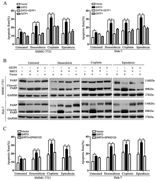 GSTP1 overexpression or JNK inhibitor attenuate the sensitizing effect of SIRT3 A-B. GSTP1 overexpression abolished SIRT3-induced apoptosis in HCC cells treated with chemotherapeutic agents. SMMC-7721 and Huh-7 cells stably expressing SIRT3 were transfected with plasmid expressing GSTP1 and were then exposed to doxorubicin (1 μg/ml), cisplatin (1 μg/ml) or epirubicin (0.5 μg/ml) for 48 h. Apoptotic ratio in different groups was detected by flow cytometry with Annexin V/PI(A) and PARP cleavage analysis (B). *, p