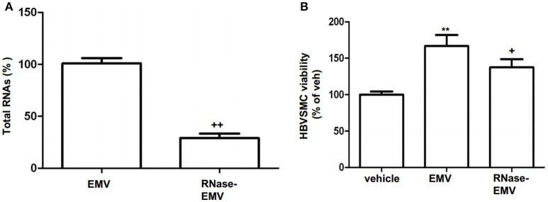 RNase digestion of EMV and effects of EMV and RNase- EMV on viability of HBVSMC. (A) Summarized data showing effective digestion of EMV total RNAs by RNase treatment. (B) Summary data showing that EMV promoted HBVSMC proliferation, and RNase-EMV was less effective. ** p
