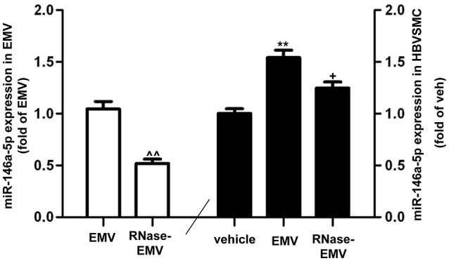 MiR-146a-5p expression in EMV and HBVSMC . Summary data showing effective digestion of miR-146a-5p in EMV by RNase treatment. ∧∧ p