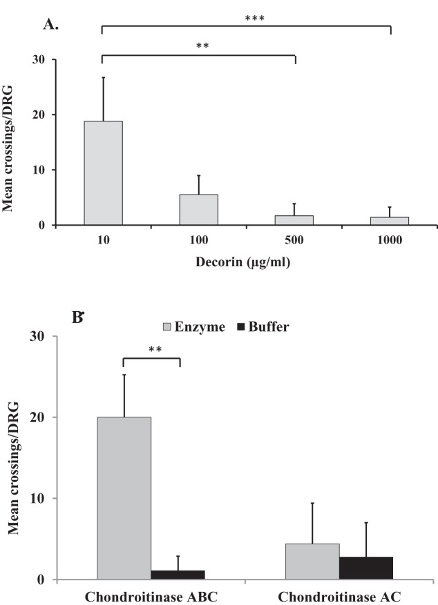 The effect of glycosylated and non-glycosylated decorin on DRG neurite growth. Graphs showing the mean ± S.D. of number of neurite crossings per DRG when cultured on ( A ) 'decorin' at a range of concentrations (10–1000 µg/ml) without any enzymatic treatment; ( B ) 'decorin' at 500 µg/ml following chondroitinase ABC and chondroitinase AC treatment (both at 250 mU/ml) or in buffer; ** P