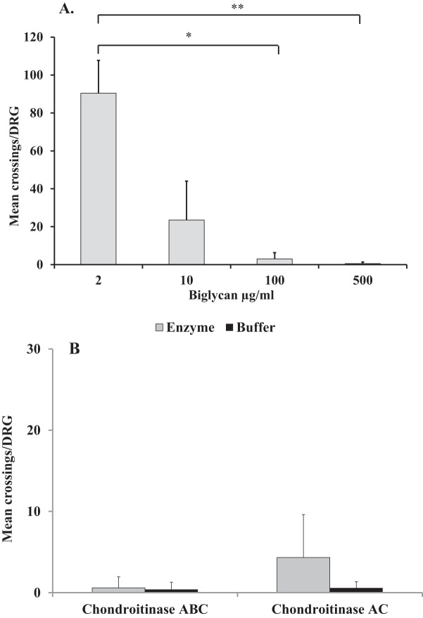 The effect of glycosylated and non-glycosylated biglycan on DRG neurite growth. Graphs showing the mean ± S.D. of number of neurite crossings per DRG when cultured on (A ) 'biglycan' at a range of concentrations (2–500 µg/ml) without any enzymatic treatment; (B) 'biglycan' at 500 µg/ml following either <t>chondroitinase</t> ABC or chondroitinase AC digestion (both at 250 mU/ml) or in buffer; * P