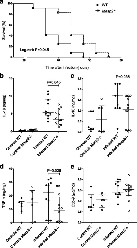 Functional role of <t>MASP-2</t> in pneumococcal meningitis mouse model. Kaplan-Meier curve showing increased survival in Masp2 −/− mice during pneumococcal meningitis ( a ). Cytokines and complement levels were measured in brain. Masp2 −/− mice had significantly lower brain levels of IL-1β, IL-10, and TNF-α 30 h after infection ( b – d ). Brain levels of C5b-9 were similar between Masp2 −/− and WT mice ( e ). Data are given as medians and 75th quartile; P values were determined with the Mann-Whitney U test