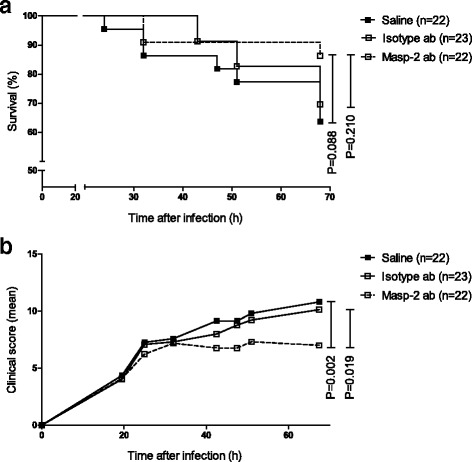 The effect of adjuvant treatment with the MASP-2 antibodies on clinical severity and survival in experimental pneumococcal meningitis. Kaplan-Meier curve of WT mice with pneumococcal meningitis treated intraperitoneally 20 h after infection with ceftriaxone (100 mg/kg) in combination with adjuvant treatment and observed for 68 h ( a ). Adjuvant treatment consisted of sterile saline, isotype antibodies (MAB205P, 1 mg/kg), or MASP-2 antibodies (D04211, 1 mg/kg). There was no difference in survival between groups. P values were determined with the log-rank test. Clinical severity scores for MASP-2 antibody-treated mice increased slower as compared to saline- (0.017 vs. 0.103 points/h) and isotype antibody (0.0017 vs. 0.080 points/h)-treated mice ( b ). P values were determined using linear mixed models with group/treatment, time, and their interaction as effects