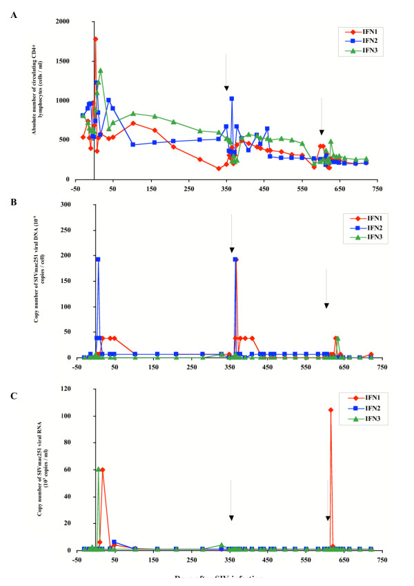 Evolution of immuno-virological parameters in SIVmac251 chronically infected macaques from the IFN group. Immunological and virological parameters were followed in macaques that received their own cells transduced by the retroviral construct allowing expression of the biologically active form of IFN-β. (A) Absolute number of circulating CD4+ lymphocytes was followed by immunophenotyping and flow cytometry. (B) Cell-associated viral load was estimated in PBMCs by a quantitative PCR method based on the specific amplification of the SIV gag gene. (C) Plasma viral load was estimated by a quantitative branched-DNA method based on the specific amplification of the SIV genome. Y axis split X axis at the first reinfusion date (D0) whereas black arrows indicate the second and third reinfusion dates.
