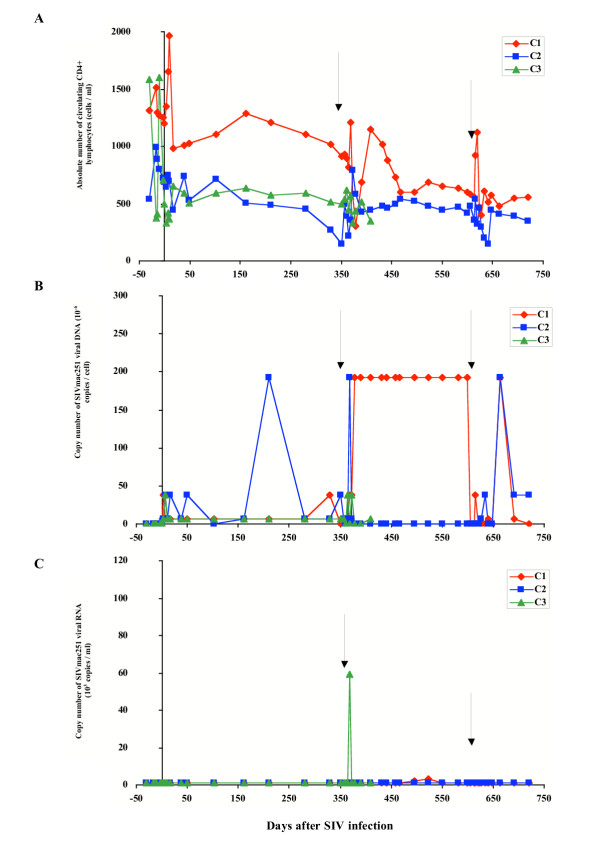 Evolution of immuno-virological parameters in SIVmac251 chronically infected macaques from the control group. Immunological and virological parameters were followed in macaques that received their own cells transduced by the deleted form of the retroviral construct. (A) Absolute number of circulating CD4+ lymphocytes was followed by immunophenotyping and flow cytometry. (B) Cell-associated viral load was estimated in PBMCs by a quantitative PCR method based on the specific amplification of the SIV gag gene. (C) Plasma viral load was estimated by a quantitative branched-DNA method based on the specific amplification of the SIV genome. Y axis split X axis at the first reinfusion date (D0) whereas black arrows indicate the second and third reinfusion dates.