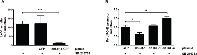 PON2 expression is regulated by LEF-1 and TCF4, but not TCF1 K562 cells were co-transfected with plasmids encoding a firefly luciferase gene under the expressional control of the 7-LEF-fos-luc A. or PON2 promoter fragment B. , a plasmid for constitutive expression of Renilla luciferase (normalization) and pEGFP-C1, pEGFP-C1-dnLEF-1, pEGFP-C1-TCF1 or pEGFP-C1-TCF4 plasmids. At 4 h after transfection, cells were treated with SB216763 (25 μM) for 24 h. Subsequently 7-LEF-fos-luc or PON2 promoter induction was analyzed, normalized to Renilla luciferase activity and expressed as fold induction. Symbols represent mean ± S.E.M. n = 2; * P