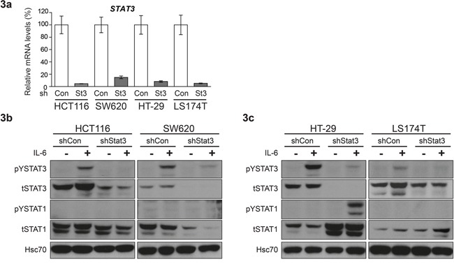 Differential effect of STAT3 knockdown on STAT1 expression in CRC cell lines a. Real time PCR analysis for quantification of STAT3 mRNA levels upon shRNA mediated knockdown. Mean values are shown, error bars are SEM and * p