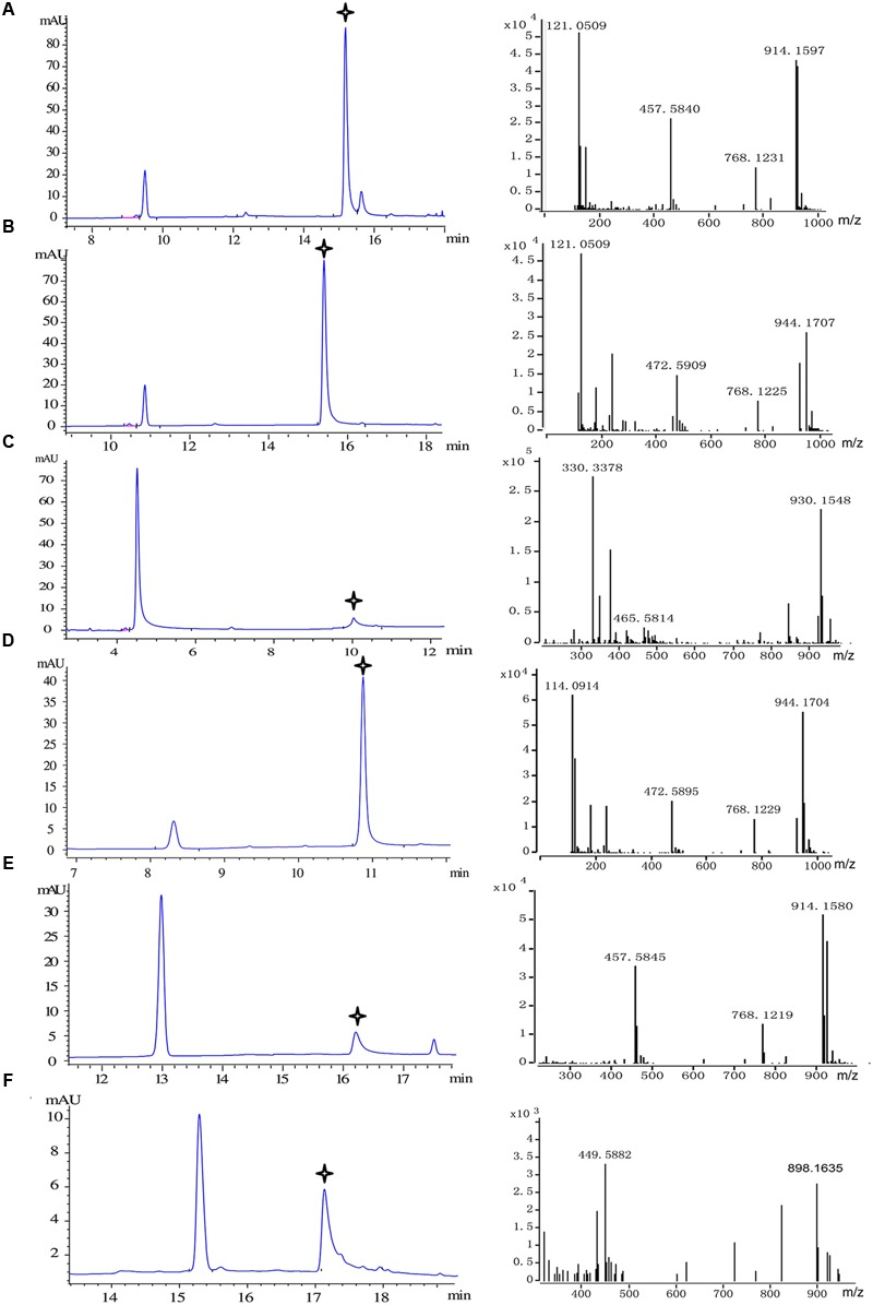 Substrate specificity of recombinant Pp4CL1. HPLC analysis and Q-TOF-MS identification of reaction products generated by recombinant Pp4CL1 protein. (A) p -Coumaric acid as substrate. (B) Ferulic acid as substrate. (C) Caffeic acid as substrate. (D) Isoferulic acid as substrate. (E) o -Coumaric acid as substrate. (F) Cinnamic acid as substrate.
