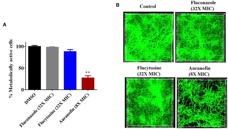 Effect of auranofin on Candida biofilms. (A) C. albicans ATCC 10231 biofilm was treated with indicated concentrations of auranofin, fluconazole, and flucytosine for 24 h. The percent metabolic activity of fungal cells in biofilms, after treatment, was determined using the XTT reduction assay. Results are presented as means ± SD ( n = 3). Statistical analysis was calculated using the two-tailed Student's t -test. P -values ( ** P ≤ 0.01) are considered as significant. Auranofin was compared both to controls and antifungal drugs ( ** ). (B) C. albicans ATCC 10231 biofilm was formed on FBS-coated glass cover slips and treated with indicated drugs for 24 h and stained with concanavalin A– conjugated with FITC dye and imaged by Leica confocal laser scanning microscopy.