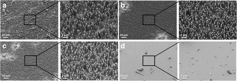 SEM images of resulting grown NWs. SEM images of 1-year-old substrates after activating for 10 min with solutions of a H 2 O 2 :KOH [1:2], b H 2 O 2 :KOH [1:3], c H 2 O 2 :NaOH [1:3], and d without any cleaning