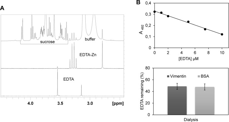 Detection and quantitation of EDTA in protein samples. (A) NMR analysis. Upper panel: 500MHz 1D-proton NMR spectrum of a commercial sample of vimentin (0.7 μM) with added 150 μM ZnCl 2 . Signals for the protons of sucrose, a stabilizer present in the sample as indicated in specifications, and those of PIPES buffer are easily identified. An additional singlet at 2.79 ppm and two coupled doublets at 3.25 and 3.32 ppm (2JHH = 17.3 Hz) are also observed. Middle panel: reference proton spectrum of EDTA in presence of Zn 2+ , the two coupled doublets corresponding to the AB spin system of the methylene protons of the four acetyl groups, non-equivalent due to the structure of the metal chelate, and the singlet corresponding to the four equivalent protons of the ethylenediamine moiety are apparent. Lower panel: reference proton spectrum of EDTA at pH 7.2, only the two characteristic singlets of uncomplexed EDTA appear. (B) Detection of EDTA by colorimetric analysis. Upper panel: Calibration curve showing the dependence on EDTA concentration of the absorbance at 492 nm of mixtures containing 100 μM PAR and 10 μM ZnCl 2 . Lower panel: Amount of EDTA remaining in samples from vimentin and BSA subjected to extensive dialysis as determined from the absorbance at 492 nm after incubation with PAR and ZnCl 2 , using the calibration curve. Initial EDTA concentration in the samples was 1 mM. Data shown are mean ± SD of 4 assays.