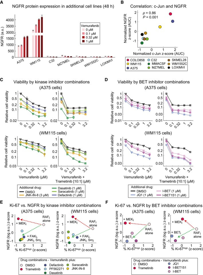 JNK , FAK , Src, and BET inhibitors overcome the NGFR High drug‐resistant state in additional BRAF V 600E/D melanoma lines NGFR protein levels measured in duplicate by immunofluorescence in seven BRAF V600E/D cell lines treated with vemurafenib at indicated doses for 48 h. Correlation between vemurafenib‐induced changes in c‐Jun and NGFR protein levels across nine BRAF V600E/D melanoma cell lines. Cells were treated with five doses of vemurafenib (0, 0.1, 0.32, 1, and 3.2 μM) for 48 h. c‐Jun and NGFR protein levels measured by immunofluorescence at each condition were averaged across two replicates and normalized to DMSO‐treated controls. The area under the dose–response curve (AUC) for the two measurements (c‐Jun and NGFR) was calculated, z ‐score‐scaled across nine cell lines, and their pairwise Pearson's correlation was reported. Relative viability of A375 and WM115 cells treated in 3 replicates for 72 h with vemurafenib or vemurafenib plus trametinib (10:1 dose ratio) in combination with indicated kinase inhibitors (C) or BET inhibitors (D). Pairwise comparison between NGFR and Ki‐67 levels in A375 and WM115 cells treated with vemurafenib in combination with indicated kinase inhibitors (E) or BET inhibitors (F). Drug doses, time points, and data normalization are similar to Figs 7 C and 8 C. Data information: Data in (A, C, D) are presented as mean ± SD.
