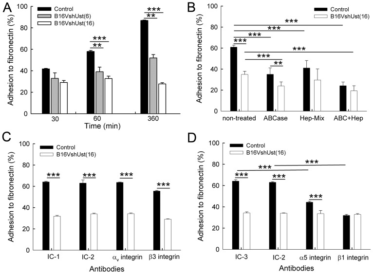 Adhesion of the B16V melanoma cell lines to fibronectin. ( A ) Adhesion of B16V control, B16V shUst(6) and B16V shUst(16) cells in fibronectin-coated wells. ( B ) Adhesion of B16V control and B16V shUst(16) cells to fibronectin after 1h after treatment with chondroitin ABC layse (ABCase), heparitinase (Hep-Mix) and ABCase+Hep-Mix. ( C ) Adhesion of B16V and B16V shUst(16) cells to fibronectin for 1h after blocking of αvβ3 integrin. The integrins were blocked with the αv integrin blocking antibody, isotype control IC-1 (Rat IgG1, κ as control against αv integrin), β3 integrin blocking antibody and isotype control IC-2 (Armenian Hamster IgG towards β3 integrin). ( D ) Adhesion of B16V and B16V shUst(16) cells to fibronectin after blocking with α5 integrin blocking antibody, isotype control IC-3 (Rat IgG2a, κ as control for α5 integrin) and β1 integrin blocking antibody and isotype control IC-2 (Armenian Hamster IgG for β1 integrin). Each experiment was performed in duplicates, n = 3, mean±SD ( A , B ), mean±SEM ( C , D ), *, P