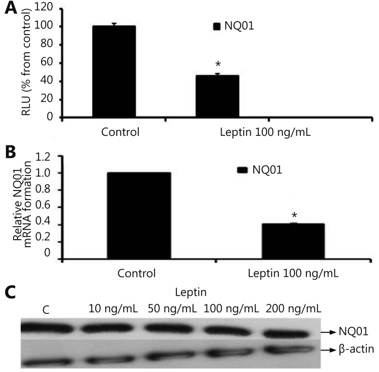 Effect of leptin on <t>NQO1</t> in MCF-7 cells.