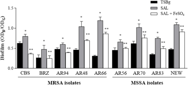 The effect of SAL on biofilm formed by MRSA and MSSA strains . Biofilms were formed in TSBg during 24 h in the presence or absence of 2 mM of SAL or SAL plus 50 μM of FeSO 4 . Each bar represents the arithmetic mean ± SEM of 6 wells from 4 independent experiments. The biofilms were quantified by crystal violet staining (OD B ) and expressed relative to the final culture density (OD G ). Statistically significant differences were represented by asterisks: ( * ) SAL-treated group vs. untreated group; ( ** ) SAL-treated group vs. SAL plus iron-treated group. p