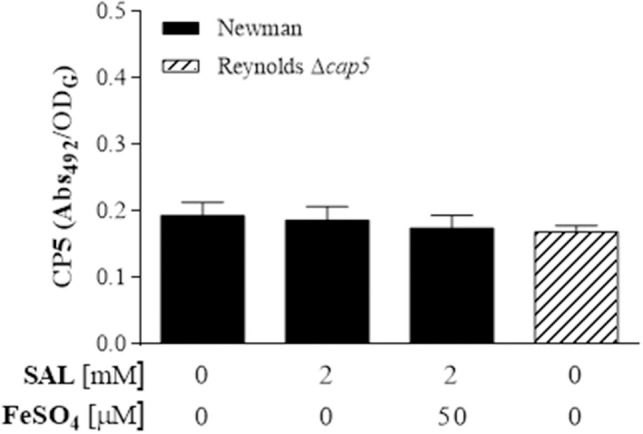 Capsular polysaccharide (CP) expression in biofilm formed by the Newman strain . Biofilms were developed in static cultures for 24 h at 37°C in TSBg supplemented with SAL or FeSO 4 as indicated. CP serotype 5 was assessed by ELISA. Each bar represents the arithmetic mean ± SEM of the Abs 492 relative to the final culture density (OD G ). Negative control: S. aureus Reynolds CP5-null.