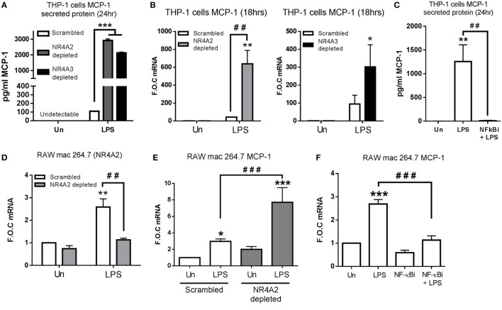 NR4A2 and 3 negatively regulate TLR4 driven MCP-1 in human and murine myeloid cells . (A,B) Undifferentiated THP-1 cells transduced with shRNA directed against scrambled non-target control, NR4A2, or NR4A3 were treated with 1 µg/ml lipopolysaccharide (LPS) for 18 h (B) and 24 h (A) , followed by media collection and RNA isolation, respectively. (C) Undifferentiated THP-1 cells were pretreated with 10 µM NF-κB inhibitor (NF-κBi) for 1 h followed by the addition of 1 µg/ml LPS for 24 h, followed by media collection. (D) Murine raw mac 264.7 cells transduced with shRNA directed against scrambled non-target control and NR4A2 were exposed to LPS for 1 h. (E) Murine raw mac 264.7 cells transduced with shRNA directed against scrambled non-target control and NR4A2 were exposed to 1 µg/ml LPS for 2 h. (F) Murine raw mac 264.7 cells were pretreated with 10 µM NF-κB inhibitor (NF-κBi) for 1 h followed by exposure to 1 µg/ml LPS for 2 h. Analysis: ELISA analysis was performed for MCP-1 protein detection on media collected at times indicated (A,C) . RNA was isolated and RT-PCR was performed at indicated times to assess levels of MCP-1 NR4A2 and control gene GAPDH (B,D–F) . Un, untreated control. Data are expressed as fold over untreated control (FOC) or pg/ml ± SEM for n = minimum of three individual experiments. * p