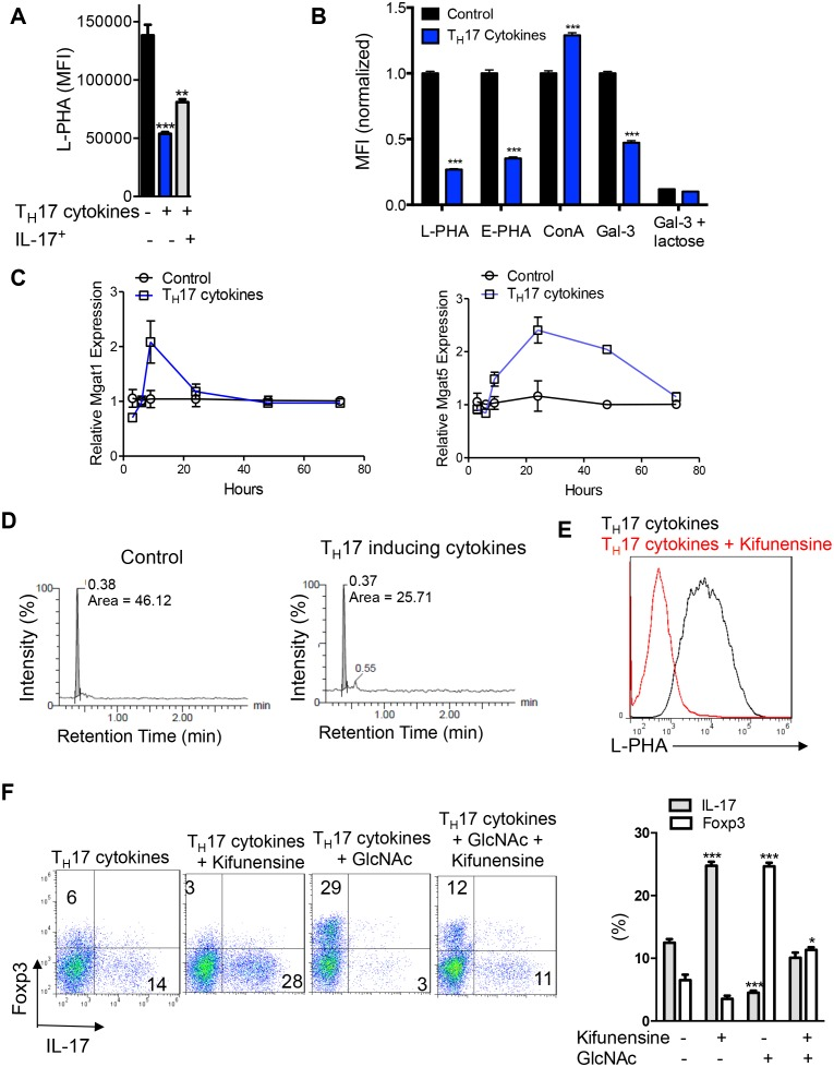 N-glycan branching controls T H 17 versus iTreg cell fate. ( A–F ) Flow cytometry ( A,B,E,F ), real-time qPCR ( C ) and UDP-GlcNAc LC-MS/MS analysis ( D ) of purified mouse splenic CD4 + T-cells activated with anti-CD3+anti-CD28 under T H 17 inducing conditions (TGFβ+IL-6+IL-23) for 3 days ( D ) or 4 days ( A,B,E,F ) or as indicated ( C ). ( A ) gated on CD4 + IL-17A - or CD4 + IL-17A + as indicated. ( B,E,F ), gated on CD4. ( B ) Lactose (50 mM) is an inhibitor of galectin binding to branched N-glycans. ( A,B,F ) Unpaired two tailed t -test ( B ) with Bonferroni corrections ( A,F ). *p