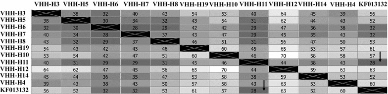 Sequence distance matrix built on in silico translated sequences of randomly picked clones from E. coli sdAb library (clones were designated as VHH-H3, 5, 7 etc.). KF013132—accession number of reference sequence from the <t>Genbank.</t> Number of amino acid residues not identical are presented in each square. Number of non-identical residues in matrix were > 28 ( arrow ) indicating high divergence of the library