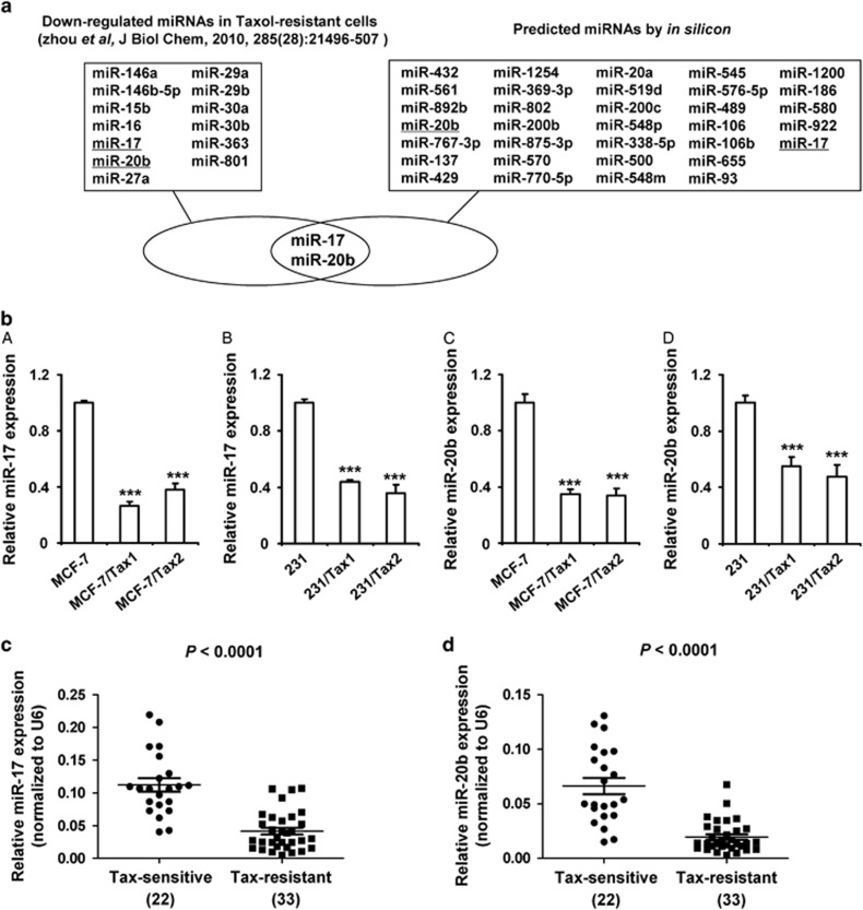 MiR-17 and miR-20b are predicted to target NCOA3 and decreased in taxol-resistant breast cancer. ( a ) Flowchart for the selection of the miR-17 and miR-20b. ( b ) RT-PCR was performed to detect the expression of miR-17 and miR-20b in MCF-7, 231, MCF-7/Tax1, MCF-7/Tax2, 231/Tax1 and 231/Tax2 cells. U6 was used as an internal control. Data represent mean±S.D. *** P