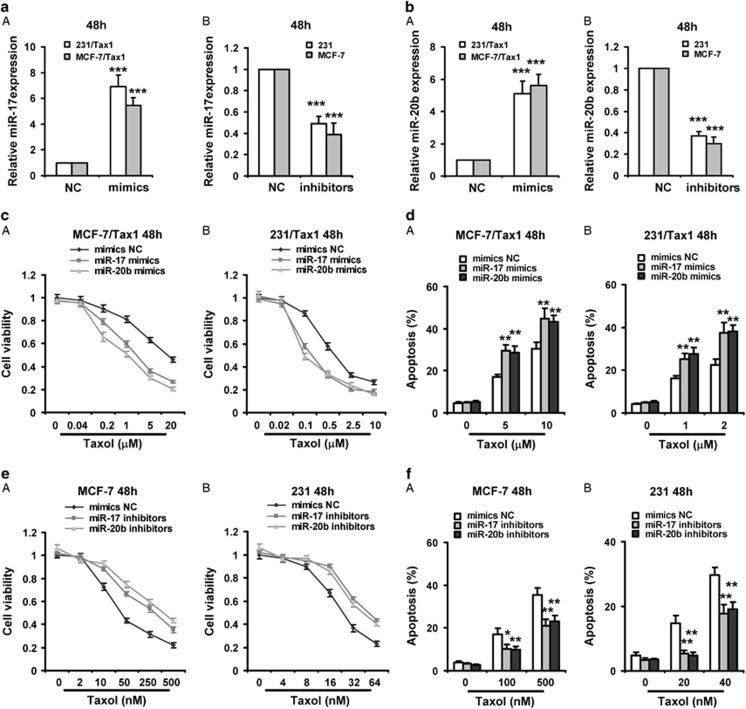 Both miR-17 and miR-20b enhances taxol-induced apoptosis in breast cancer cells. ( a and b ) (a) 231/Tax1 and MCF-7/Tax1 were transfected with miR-17 mimics ( a ) or miR-20b mimics ( b ) and NC for 48 h, respectively. (B) MCF-7 and 231 cells were transfected with miR-17 inhibitors ( a ) or miR-20b inhibitors ( b ) and NC for 48 h, respectively. RT-PCR was performed to detect the expression of miR-17 or miR-20b. ( c and d ) MCF-7/Tax1 (A) and 231/Tax1 (B) were transfected with miR-17 or miR-20b mimics. ( e and f ) MCF-7 (A) and 231 (B) were transfected with miR-17 or miR-20b inhibitors. After 8 h, cells were treated with indicated dose of taxol (Tax) for additional 48 h. MTT assay was performed to examine cell viability ( c and e ). Cell apoptosis was assessed by Annexin-V-FITC/PI staining assay by flow cytometry ( d and f ). Columns, means of three determinations; bars, S.D. * P