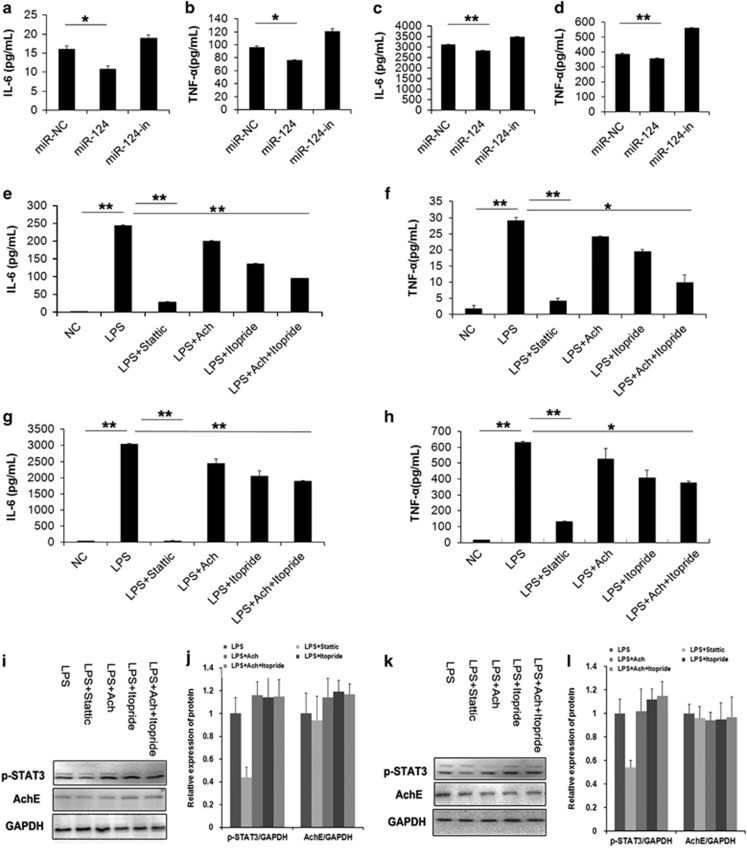 miR-124 attenuates the IL-6 and TNF- α production in macrophages. ELISA assay showed that overexpression of miR-124 significantly suppressed the LPS-induced IL-6 and TNF- α production in macrophages. ( a and b ) The human macrophages derived from THP-1 cells. ( c and d ) The mice macrophages RAW264.7. The static, Ach and itopride inhibited the IL-6 and TNF- α production in macrophages. ( e and f ) The human macrophages induced from THP-1 cells. ( g and h ) The RAW264.7 cells. ( i - l ) The expression of p-STAT3 and AChE proteins. * P