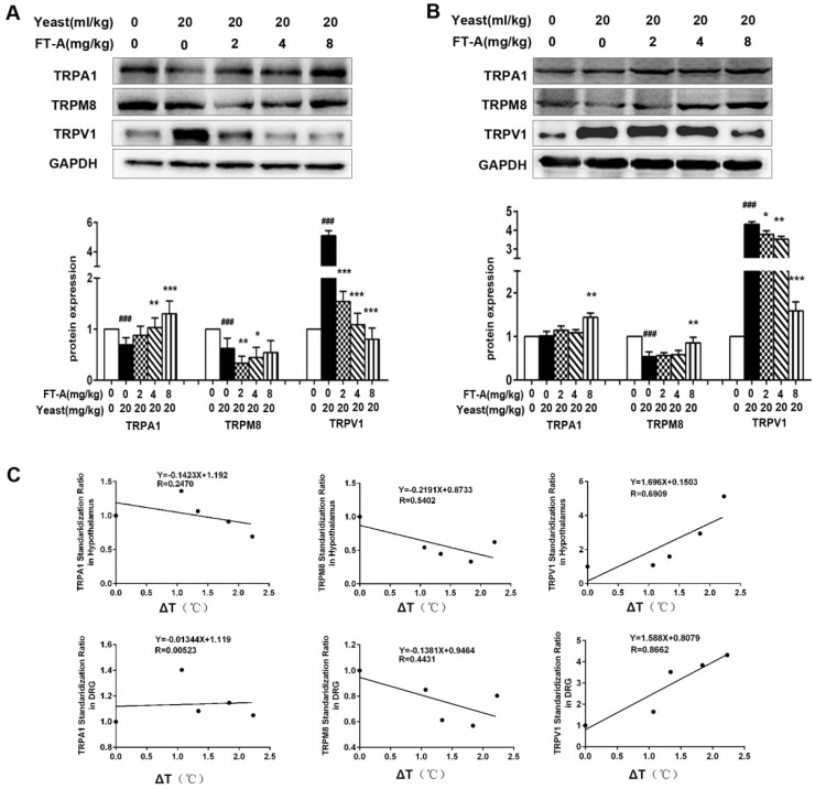 FT-Ainhibits TRPV1 expression while increases TRPA1 and TRPM8 expression in the hypothalamus and DRG of the mice with yeast-induced pyrexia. Expressions ofTRPV1, TRPA1 and TRPM8 were evaluated in the hypothalamus (A) and DRG (B) by Western blotting. Values are Mean ± SD of 5 mice per group. # P