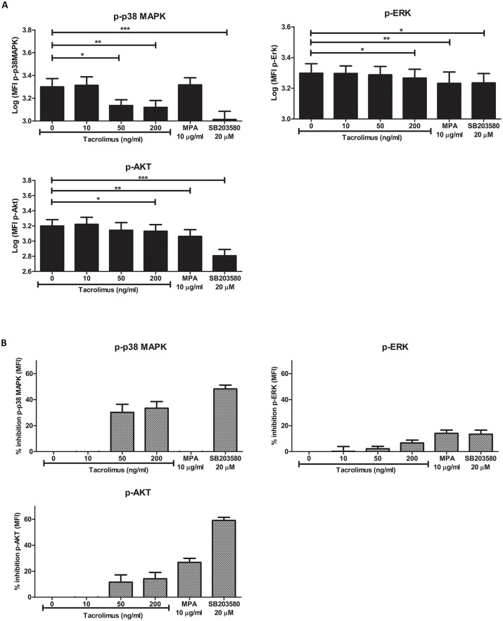 Tacrolimus and MPA can inhibit signaling pathway activation in whole-blood samples. (A) Phospho-p38MAPK (upper left panel), p-ERK (upper right panel) and p-Akt (lower panel) phosphorylation in monocytes was measured as MFI level. Blood samples from healthy volunteers were spiked with vehicle, 10 ng/ml tacrolimus, 50 ng/ml tacrolimus, 200 ng/ml tacrolimus, 10 μg/ml MPA or 20 μM of the MAPK inhibitor SB203580. The effect of tacrolimus and MPA was based on the stimulated samples without the addition of drugs. The MAPK inhibitor was used as a positive control. Gating was performed according to Fig 2 . Tacrolimus was found to have an effect on p38MAPK, ERK and Akt phosphorylation. Akt and ERK phosphorylation was decreased in the presence of MPA. (B) Percentages of inhibition for the phosphorylation of p38MAPK (upper left panel), ERK (upper right panel) and Akt (lower panel). Data are normalized for the MFI values of the stimulated samples without the addition of immunosuppressive drugs. (Data are plotted as the mean ±SEM; n = 5) *) p