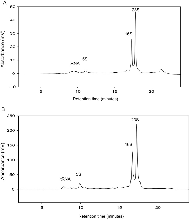 IP RP HPLC chromatograms of total RNA extracted from E. coli using Ribopure™ bacterial RNA extraction kit. (a) IP RP HPLC chromatogram of total RNA from E. coli HT115 (DE3) cells transformed with plasmid pCOIV prior to induction. (b) IP RP HPLC chromatogram of total RNA from E. coli HT115 (DE3) cells transformed with plasmid pCOIV following induction with IPTG. The corresponding 5S, 16S and 23S rRNA are highlighted. 2 and 8 μg of total RNA was analysed using gradient condition 1 at 260 nm UV detection.