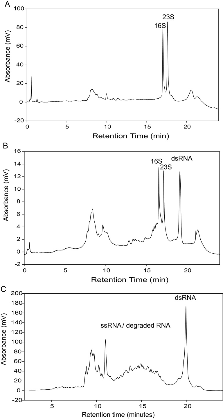 IP RP HPLC chromatograms of total RNA extracted from E. coli using TRIzol ® Max™ Bacterial RNA Isolation Kit. (a) IP RP HPLC chromatogram of total RNA from E. coli HT115 (DE3) cells transformed with plasmid pCOIV prior to induction. (b) IP RP HPLC chromatogram of total RNA from E. coli HT115 (DE3) cells transformed with plasmid pCOIV following induction with IPTG. The corresponding rRNA and dsRNA are highlighted. Approximately 15 μg of total RNA was analysed using gradient condition 1 at 260 nm UV detection. (c) IP RP HPLC chromatogram of total RNA extracted from E. coli HT115 (DE3) in conjunction with mechanical shearing and TRIzol. Approximately 10 μg of total RNA was analysed using gradient condition 1 at 260 nm UV detection.