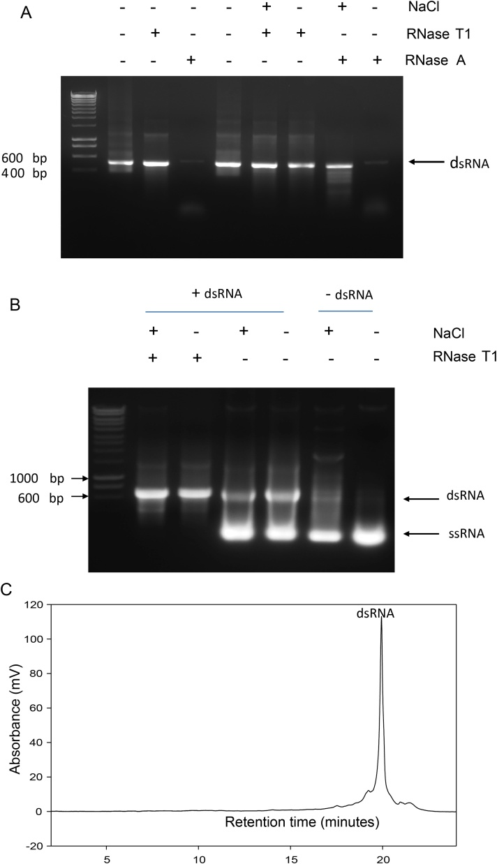 Purification of dsRNA from E. coli . (a) Agarose gel electrophoresis of purified in vitro transcribed dsRNA and ssRNA. Following in vitro transcription, 2 μg of dsRNA containing excess ssRNA were incubated with RNase T1 in both the presence and absence of 0.5 M NaCl and purified by SPE. (b) Agarose gel electrophoresis of extracted and purified dsRNA. Following TRIzol extraction of total RNA from E. coli expressing dsRNA samples were incubated with RNase T1 in both the presence and absence of 0.3 M NaCl as indicated prior to purification using solid phase extraction. Control experiments were performed using total RNA from non-induced E. coli . (c) IP RP HPLC chromatogram of purified dsRNA. Following TRIzol extraction the total RNA from E. coli was purified in a single step using RNase T1/DNase in conjunction with solid phase extraction prior to analysis using IP RP HPLC gradient condition 1 at 260 nm UV detection.
