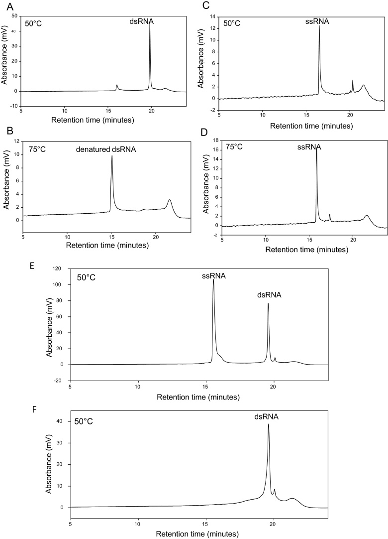 IP RP <t>HPLC</t> analyses of dsRNA and ssRNA under denaturing and non-denaturing conditions. (a) IP RP HPLC chromatogram of dsRNA at 50 °C. (b) IP RP HPLC chromatogram of dsRNA at 75 °C. (c) IP RP HPLC chromatogram of ssRNA at 50 °C. (d) IP RP HPLC chromatogram of ssRNA at 75 °C. (e) IP RP HPLC chromatogram of in vitro transcribed dsRNA with an excess of ssRNA. (f) IP RP HPLC chromatogram of purified dsRNA. Following in vitro transcription, the <t>RNA</t> was purified in a single step using RNase T1/DNase in conjunction with solid phase extraction. 2–3 μg of in vitro transcribed ds/ssRNA was analysed using gradient 1 at 260 nm UV detection.