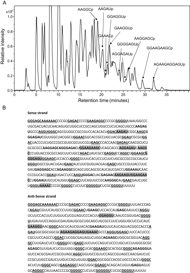 RNase A Mass Mapping of the dsRNA using LC ESI MS. (a) Base peak chromatogram of the oligoribonucleotides generated from an RNase A digest of the purified dsRNA. Analysis was performed using LC ESI MS on a maXis ultra-high resolution time of flight instrument. A number of the identified oligoribonucleotides are highlighted. (b) Summary of the RNase mass mapping. Underlined bold=monoisotopic masses correspond to a number of theoretical sequence isomers in either sense or antisense strand. Bold=monoisotopic masses corresponding to a number of theoretical sequence isomers that are unique in either sense or antisense strand. Grey highlight=monoisotopic masses corresponding to single predicted unique oligoribonucleotide sequence in only the sense or antisense strand.