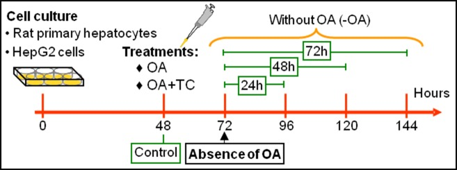 Experimental protocol for the different treatments used with rat primary hepatocytes and HepG2 cells. Cells treated with the respective vehicle of OA or Triacsin C, ethanol+BSA or methanol, constituted the controls for the different experimental groups.