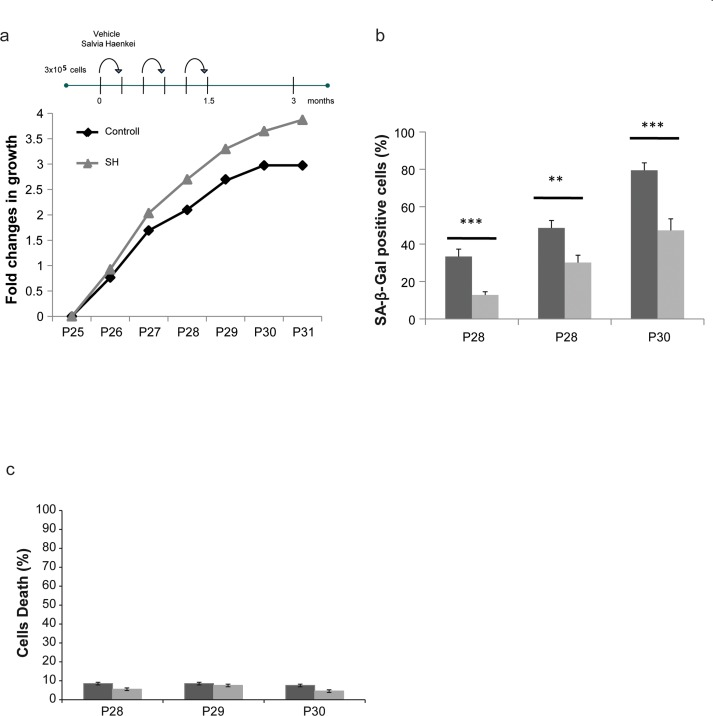 Effect of S. haenkei treatment on replicative senescence in human fibroblasts ( a ) Growth curve of human WI38 fibroblasts treated with S . haenkei extract. WI-CCL75 human fibroblasts were plated 300.000 cells per 10cm dish, and subsequently passed and replated in the same number every 3 days for total of 24 passages up to the point when treatment with S. haenkei was initiated. At passage 25, cells were plated at the same number 300.000 cells per plate, and treated with 10μg/ml SH extract. Every 3 days cell number was determined by Trypan blue staining and cells replated 300.000 per plate and re-treated. Results are expressed as fold change in cell number from one representative experiment out of 4 independent experiments. ( b ) Senescence of human WI38 fibroblasts treated with S. haenkei extract. The graph represents percentage of β-galactosidase positive cells revealed in culture at each passage. Quantifications were done on 4 images (roughly 500 cells) per experiment by determining the ratio of perinuclear blue–positive to perinuclear blue–negative cells. Results are expressed as mean values (+SEM) of cell count in four independent experiments. ( c ) Cell death in culture of human WI38 fibroblasts upon treatment with S. haenkei extract. The graph represents percentage of Trypan blue positive (dead) cells revealed in culture at each passage. Quantifications were done on one experimental image (roughly 100 cells) in one representative experiment.