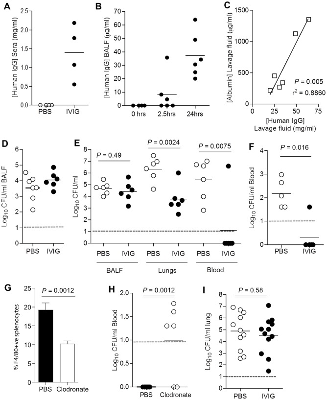 Passive vaccination with IVIG protects against IPD in murine models of S . pneumoniae infection. Mice were passively vaccinated by i.p. administration of 12.8 mg of IVIG (Intratect) or PBS 3 hours before challenge with S . pneumoniae . ( A ) and (B) Concentration of human IgG measured by ELISA after (A) in mouse sera 3 h post-IVIG (n = 4), and ( B ) in mouse BALF recovered from mice 3 h post-IVIG and immediately before and at 2.5 and 24 h after i.n. challenge with 10 7 CFU of TIGR4 strain S . pneumoniae (n = 4 to 6). (C) Correlation between concentration of murine albumin (mg/ml) and human IgG (μg/ml) in BALF 24 hr following invasive i.n. challenge in IVIG-treated mice (n = 6); P and r 2 values were calculated using the F test. (D) Bacterial CFU (log 10 ) recovered from BALF 2.5 hr following IN challenge with 5x10 5 CFU of TIGR4 of IVIG-treated or PBS-treated control mice (n = 6 or 7). (E) Bacterial CFU (log 10 ) recovered from BALF, lung tissue or blood 24 hr following IN challenge with 10 7 CFU of TIGR4 of IVIG-treated or PBS-treated control mice (n = 6). (F) Bacterial CFU (log 10 ) recovered from blood 4 hr following i.v. challenge with 5x10 5 CFU of TIGR4 of IVIG-treated or PBS-treated mice (n = 5). (G) Effect of administration of i.v. 100 μl liposomal clodronate (5mg/ml) to mice on the numbers of F4/80+ve splenocytes measured by flow cytometry (n = 6), with data presented as means, error bars represent SDs, and P values were calculated using unpaired 2-tail Student t-test. (H) Effect of clodronate or PBS administration on bacterial CFU (log 10 ) recovered from the blood of IVIG-treated mice 4 hr following i.v. challenge with 5x10 5 CFU of TIGR4 (n = 5). ( I) Bacterial CFU (log 10 ) recovered from the lungs of neutrophil depleted mice (by prior treatment with the antiLy6 antibody 1A8) given either IVIG or PBS 24 hr and then inoculated i.n. with 5x10 6 CFU of TIGR4 (n = 11 or 12). For (A, B, D, E, F, H, I) , symbols represent data from individual mice, bars repre