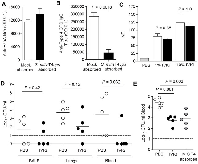 Absorption of anti-capsular antibody does not prevent IVIG protection against murine models of IPD. (A) Mean (SD) anti-PsaA titres measured by ELISA in IVIG following depletion of type 4 specific IgG by pre-absorption with type 4 capsule expressing S . mitis . ( B ) Mean (SD) anti-capsular serotype 4 titre IgG titre measured by ELISA in type 4 specific IgG-depleted IVIG. ( B ) Mean (SD) MFI of anti-human IgG binding to wild-type (clear columns) and unencapsulated (black columns) S . pneumoniae TIGR4 following incubation in 1% or 10% in type 4 specific IgG-depleted IVIG. ( C ) Bacterial surface IgG binding measured by flow cytometry to S . pneumoniae TIGR4 incubated in PBS (grey column), 1% or 10% mock absorbed IVIG with (filled columns) or type 4 specific IgG-depleted IVIG (open columns). For panels (A) to (C) data are presented as means and SDs of three to four technical replicates and representative of experiments repeated at least twice. ( D ) Log 10 CFU recovered from BALF, lungs, and blood 24 h after i.n. challenge with 1x10 7 CFU S . pneumoniae TIGR4 for mice pre-treated with 12.8 mg of type 4 specific IgG-depleted IVIG or PBS. ( E ) Log 10 CFU recovered from blood 4 h after i.v. challenge with 5x10 5 CFU S . pneumoniae TIGR4 for mice pre-treated with PBS (open circles), or 12.8 mg of mock absorbed IVIG (black circles) or type 4 specific IgG-depleted IVIG (grey circles). Data for panels (D) and (E) were obtained using IVIG depleted of capsular antibody on separate occasions; symbols represent data from individual mice, bars represent group means, and P values were calculated using unpaired 2-tail Student t-test (D) or one way ANOVA (E). Dashed lines represent the limit of detection.
