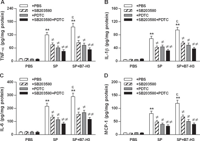 Blockage of NF-κB p65 and/or MAPK <t>p38</t> attenuates B7-H3-amplified proinflammatory cytokine and chemokine production in brain tissues of S . pneumoniae -infected mice. Mice were challenged with PBS as the control, live S . pneumoniae (SP), or live S . pneumoniae plus B7-H3 (SP+B7-H3) 1 hr after mice pretreated with the MAPK p38 inhibitor SB203580, the NF-κB p65 inhibitor PDTC, or their combination (SB203580+PDTC) as described in the Methods. Brain samples were collected at 18 hrs after challenges for detecting protein levels ( B ) of TNF-α ( A ), IL-1β ( B ), IL-6 ( C ), and MCP-1 ( D ) by ELISA. Data are expressed as mean ± SD of five to six mice per time point and represent two separate experiments. ** p