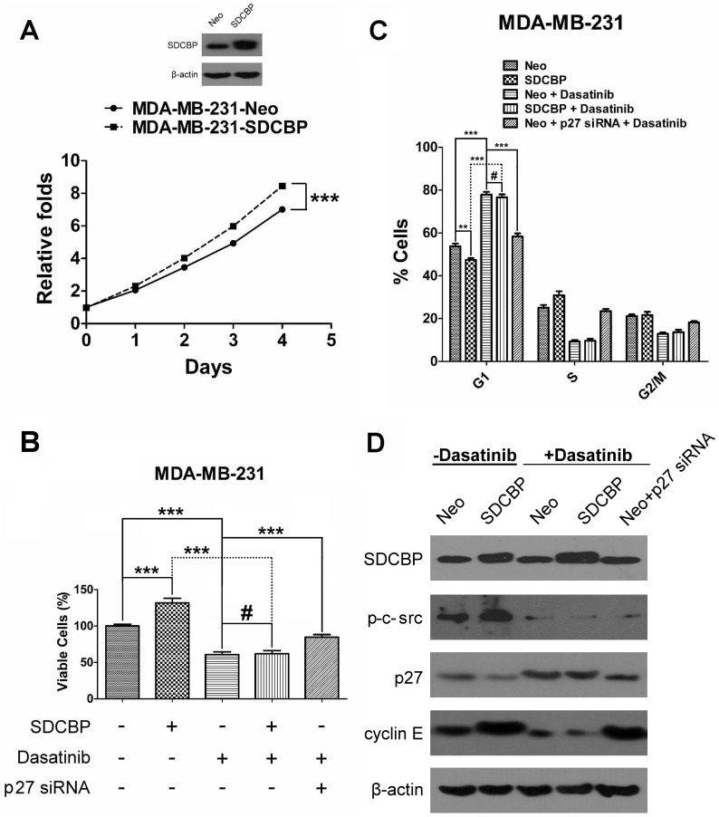 The effects of SDCBP overexpression and <t>dasatinib</t> treatment on cell proliferation, viability, the cell cycle, and its important regulatory molecules in MDA-MB-231 cells. (A) MTT assays were used to evaluate the effects of SDCBP overexpression on the proliferation of MDA-MD-231 cells. (B) Trypan blue staining was used to evaluate the effects of SDCBP overexpression and/or 100 nM dasatinib administration, as well as 100 nM dasatinib together with p27 siRNA on cell viability (#P > 0.05; ***P
